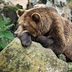 Is Your 401(k) or IRA a Sleeping Tax Bear?