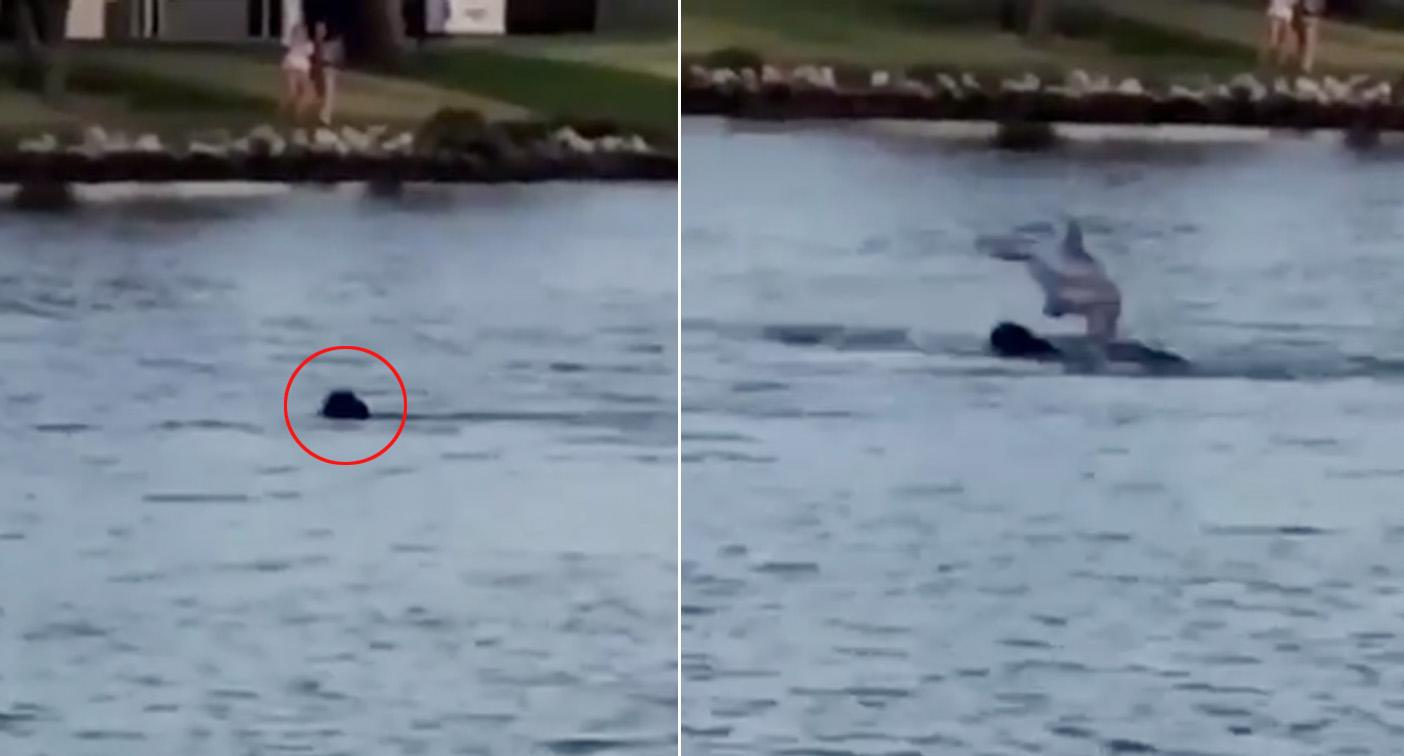 'Incredible' moment dog makes friends with dolphin in river