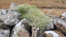 Some insects, lichen and moss bucking trends in UK nature declines – study