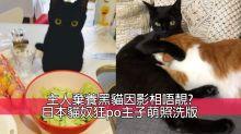 港女講日:黑貓因為IG而被棄養?貓奴憤怒:咪當寵物係呃like工具!
