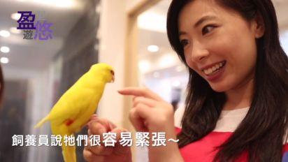 【好想飛】盈遊大阪 小鳥咖啡室