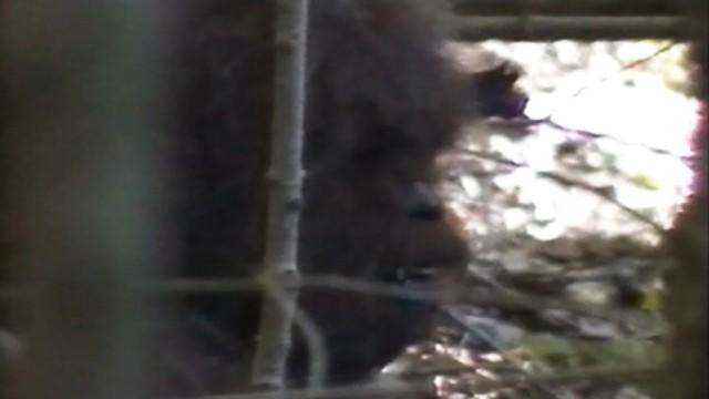 Bigfoot Exists, Research Team Claims