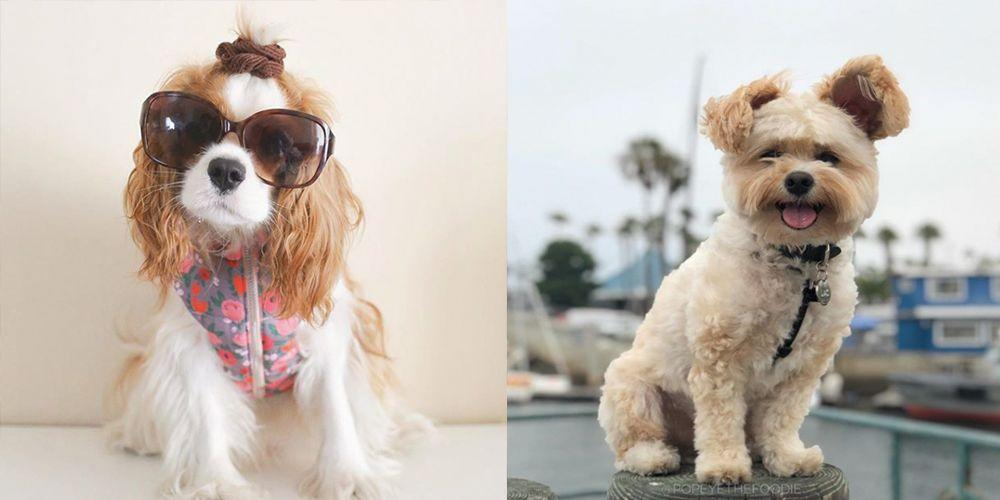These Instagram Famous Dogs Will Make You Smile Even on a Bad Day