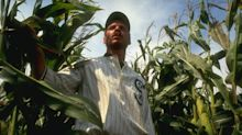 Crowdfund set up after baseball field from Field of Dreams is vandalised