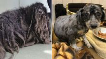 Rescue dog has his dreadlocks cut off so it can finally walk properly