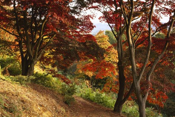 """<p> In autumn, the steep hillside of Winkworth Arboretum turns gold, brown, red and bronze, and is beautifully reflected in the ripples of its lake. The tranquil arboretum has over 1,000 shrubs and trees including Japanese maples, acers and liquidambar. Visit <a href=""""http://www.nationaltrust.org.uk/"""" target=""""_blank"""">nationaltrust.org.uk</a></p>"""