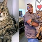 Massive 26-pound cat 'BeeJay' looking for forever home in Philadelphia