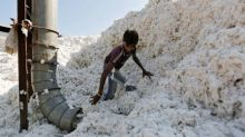 India sells new season cotton crop to China in rare advance deals