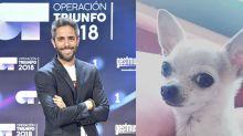 Roberto Leal convierte a su perra Pepa en una auténtica estrella de Instagram