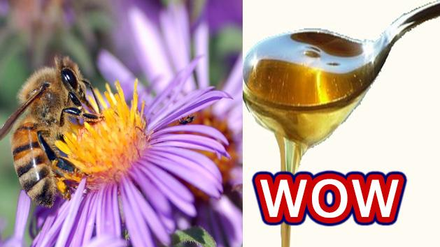 WOW- Mystery Of Getting Honey Revealed