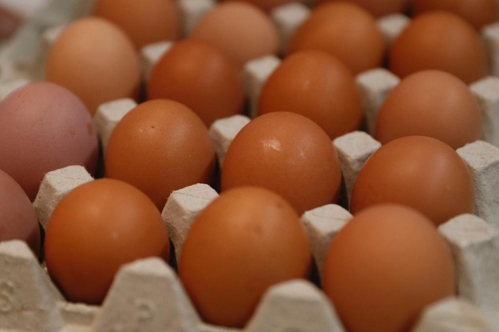 """The scientists now have three hens whose eggs containing the drug """"interferon beta"""", with the birds laying eggs almost daily, the report said"""