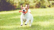 Happy National Pet Day! Spoil your dog with BarkBox toys, on sale at Amazon
