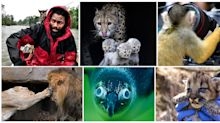 Amazing animal photos captured in 2018