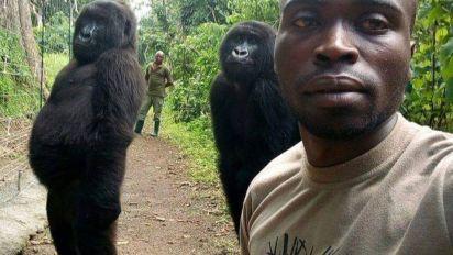 La historia tras la foto viral de estos dos gorilas