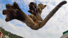 Mortal tomcats! Photographer snaps flying felines in kung fu poses