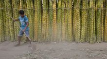 World sugar market could swing to deficit in 2019/20 as Brazil, EU curb output: broker