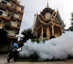 Thailand considers Zika tests for all pregnant women