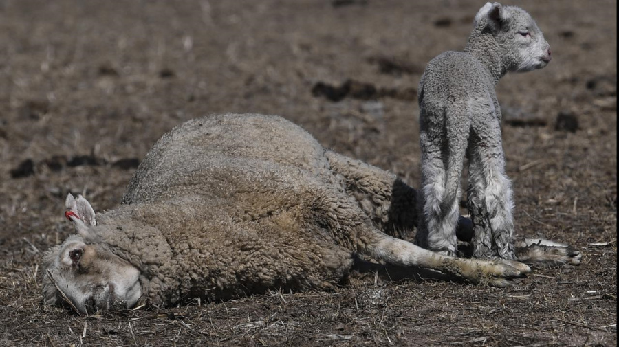 More drought support for Aussie farmers
