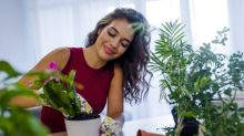 Five house plants that purify and detoxify the air you breathe