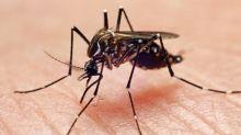 Curiosidades de los mosquitos