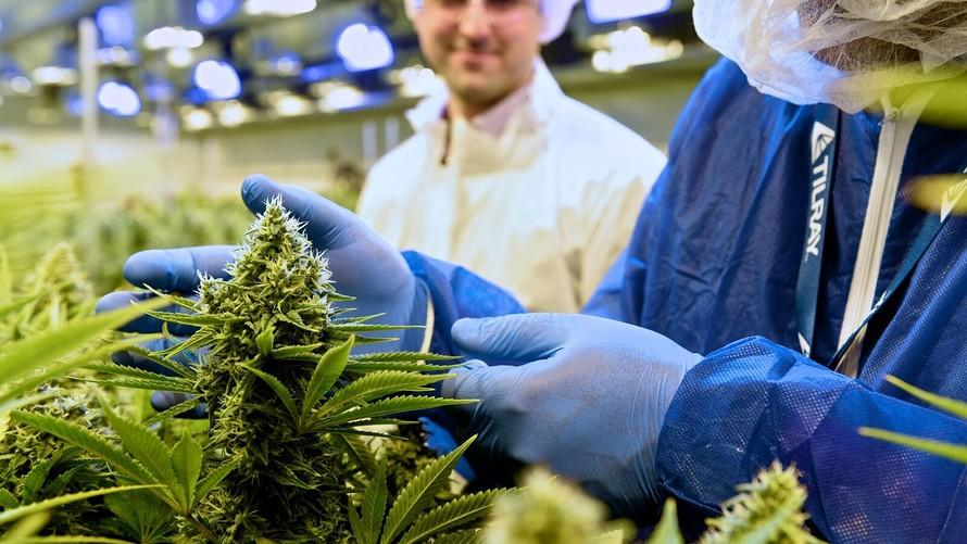 Tilray partners with Novartis in Big Pharma's first deal of its kind with Big Marijuana