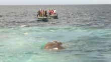 Sri Lankan navy rescue elephant dragged out to sea