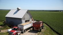 As China soy demand wavers, U.S. farmers turn back to grains