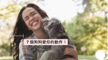 狗狗對你做出這 7 個動作,那就証明牠很愛你!