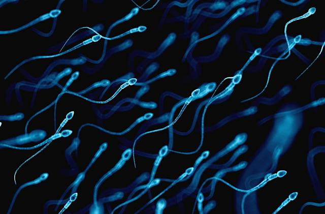 Researchers use sperm to deliver cancer drugs to tumors