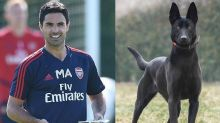 RM110,000 guard dog: Arsenal manager among EPL big names to splash on security