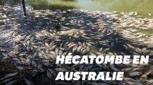 Un million de poissons d'eau douce retrouvés morts en Australie