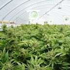 CannTrust: Why Has the Stock Fallen Today?
