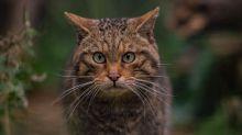 Extinction: Quarter of UK mammals 'under threat'