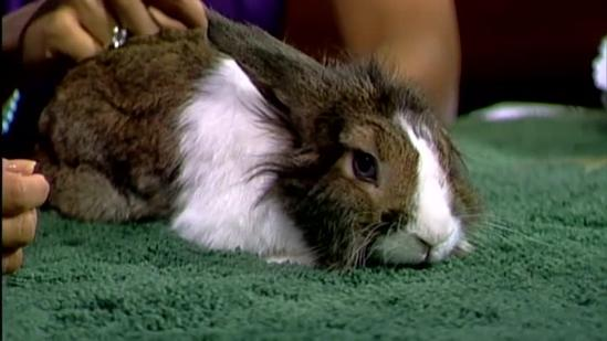 Meet Panda, on KITV's Pets on Set