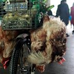 China's coronavirus outbreak proves we must pay closer attention to animal health