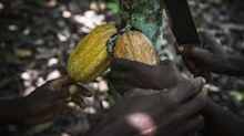 Top Cocoa Grower Accuses Mondelez of Backtracking on Farmer Pay
