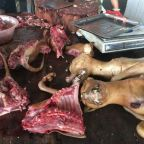Yulin Dog Meat Festival: What is it, how did it start and will activists ever manage to get it banned?