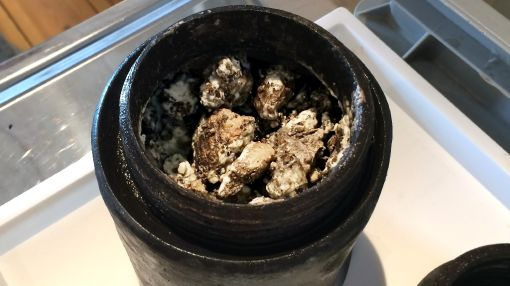 Whey to go: 17th-century cheese found in Baltic wreck