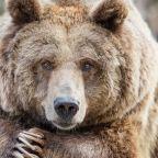 Shanghai Wildlife Park Visitors Witness Employee Being Killed by Bears