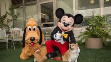 3 Reasons Disney World Is Going to the Dogs