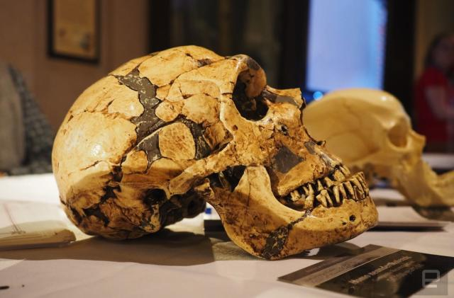 A rare fossil makes an appearance at the Natural History Museum