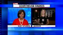 Snakes in The Courthouse