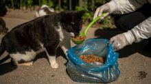 Strays feel the bite as pandemic spreads