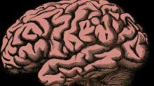 ¿Por qué nuestro cerebro se parece a una nuez?