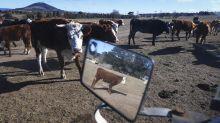 Disgusting act deals drought-stricken farmer another cruel blow