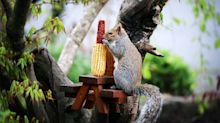 Tiny picnic tables for squirrels go viral, here's where to buy one