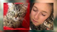 La historia de Lee, el gato que quieren sacrificar en Bélgica por su origen