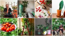 10 Indian Instagram accounts that give us urban gardening goals