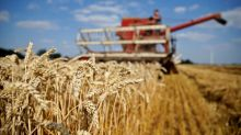 Analysis: Global wheat supply to hit crisis levels; big China stocks won't provide relief