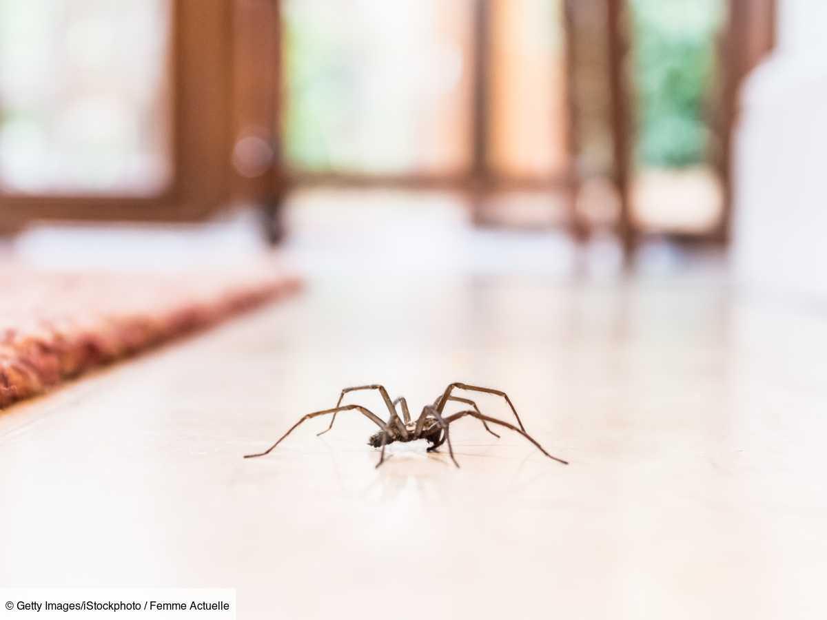 Astuces Naturelles Pour Se Débarrasser Des Fourmis araignées, mouches, mites, souris, cafards, termites : 3